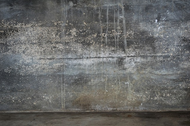 Basement mold and mildew can ruin a home. Contact Ground Up Foundation Repair for solutions.